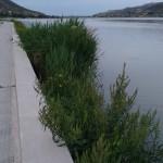 Malas hierbas (1)