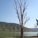 Retirada arbolado seco y caido (3)